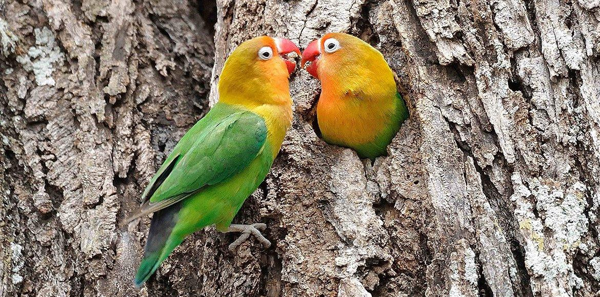 lovebirds couple