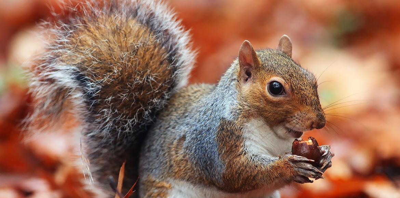 Squirrels Witte Molen