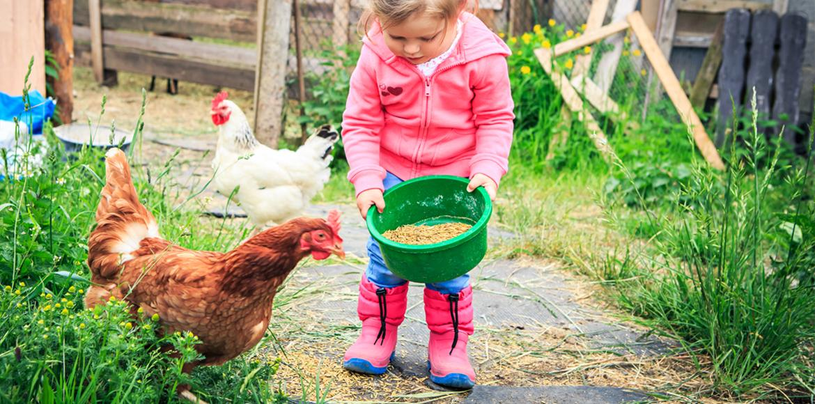little girl is feeding the chickens